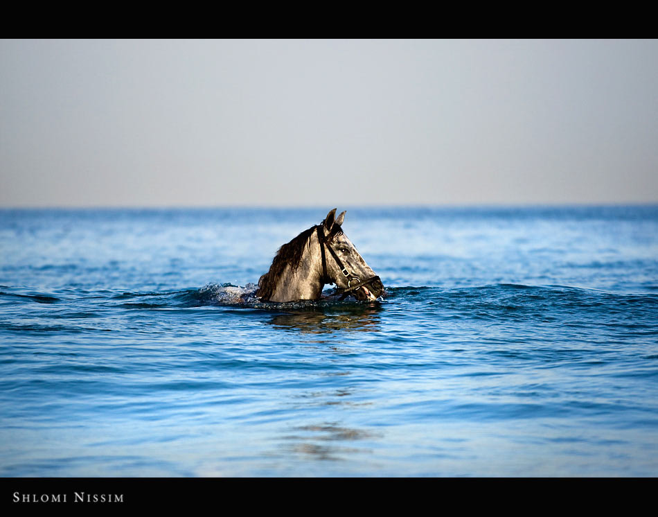 Photograph Sea horse by shlomi nissim on 500px