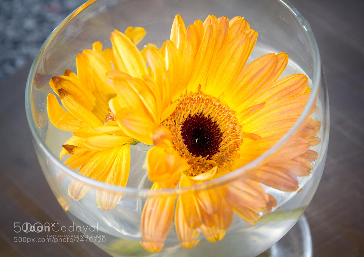 Photograph beber flores by Joan Marti on 500px