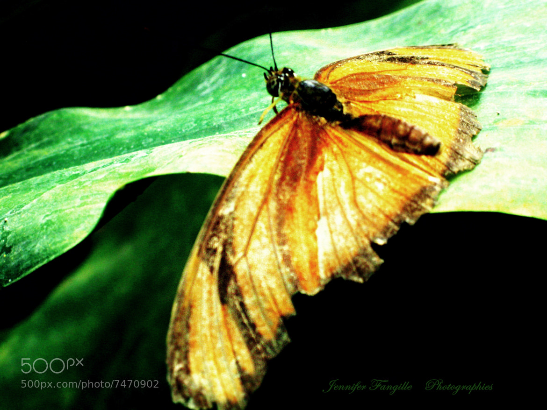 Photograph Butterfly effect by Jennifer Fangille on 500px