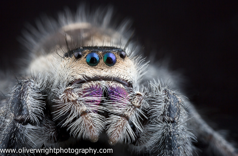 Up Close and Personal With a Regal Lady by Oliver Wright on 500px.com