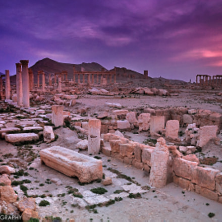 84 Hours In Palmyra - Syria