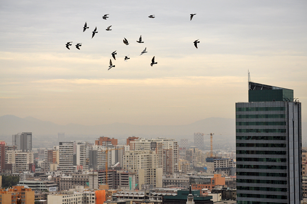 Photograph The birds and Santiago de Chile by Doreen Reichmann on 500px
