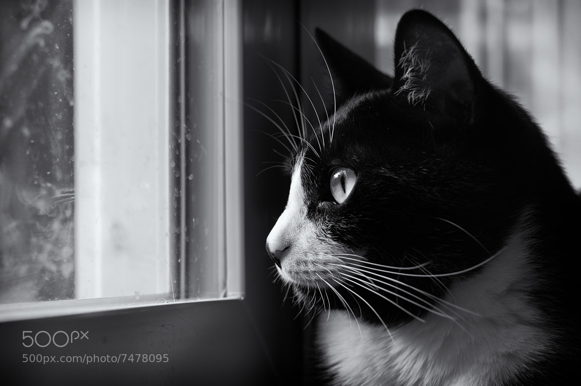 Photograph Fannie stares by Lori Coleman on 500px