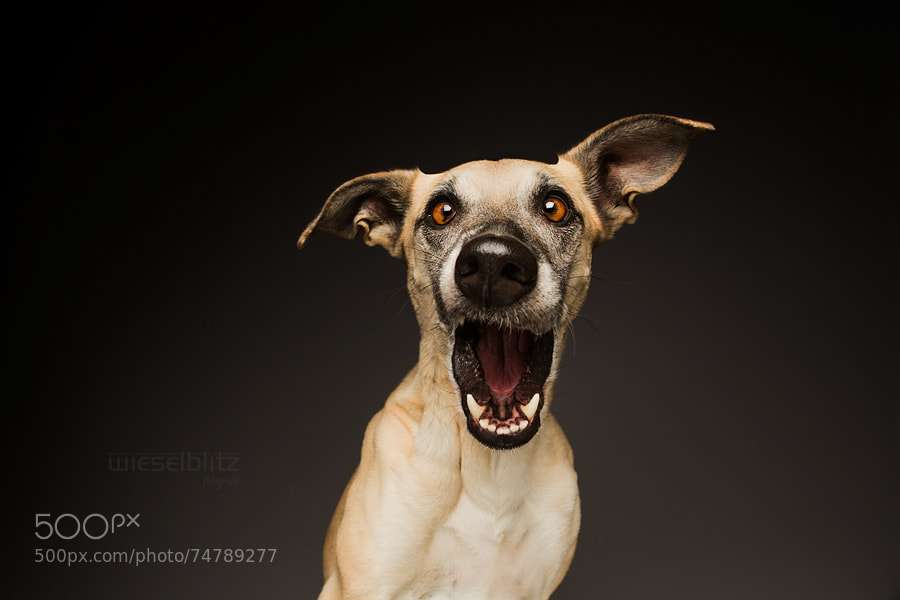 "Photograph ""You are NOT my mother?"" by Elke Vogelsang on 500px"