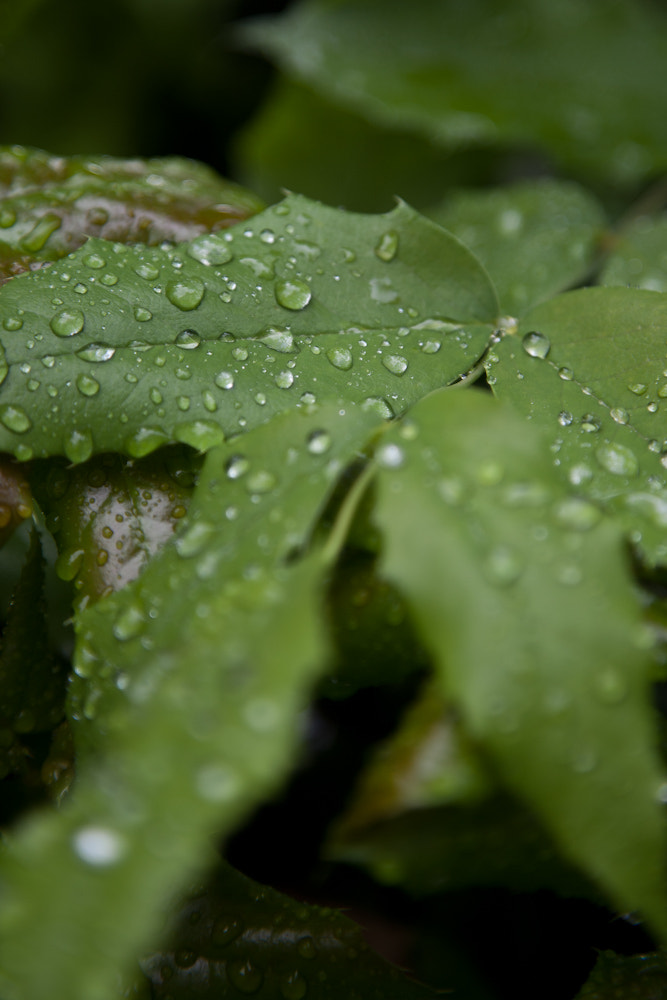 Photograph Droplets by Alun Churcher on 500px