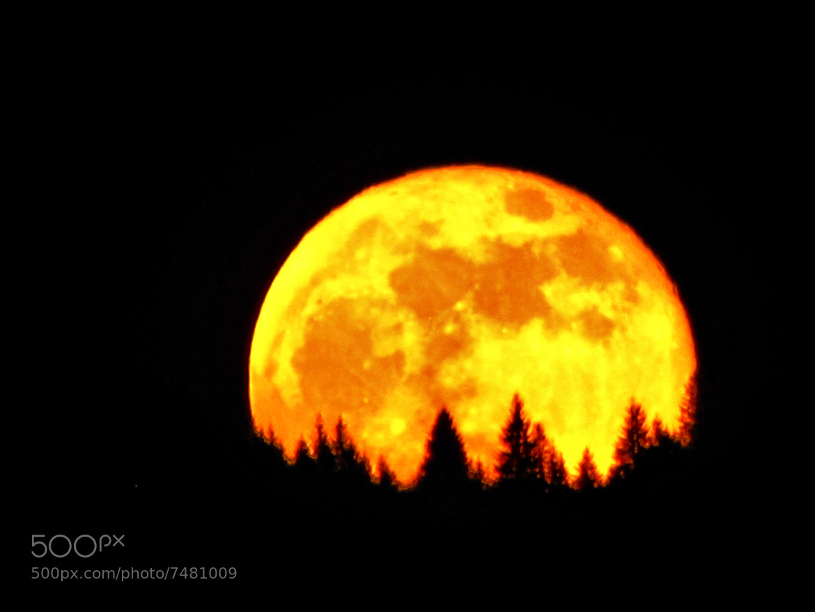 Photograph Supermoon by Rausch Wilhelm Robert on 500px