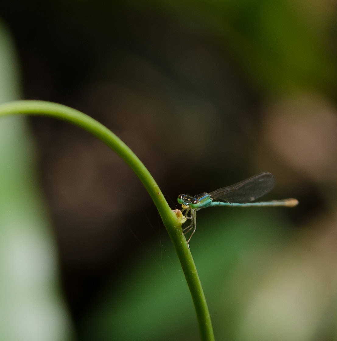Photograph DragonFly by Vikas Nambiar on 500px