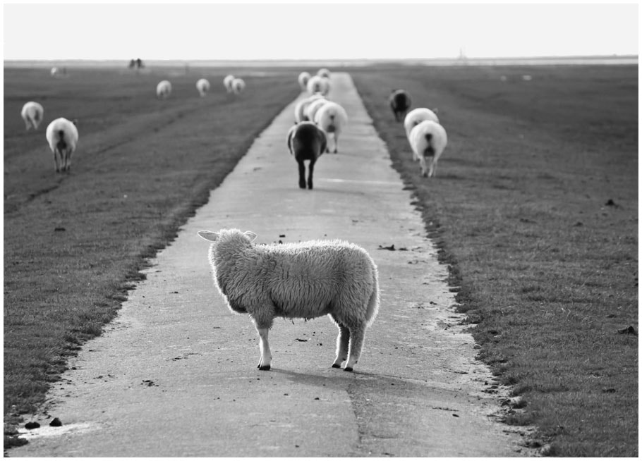 Photograph Where are they going? by Julia Lau on 500px