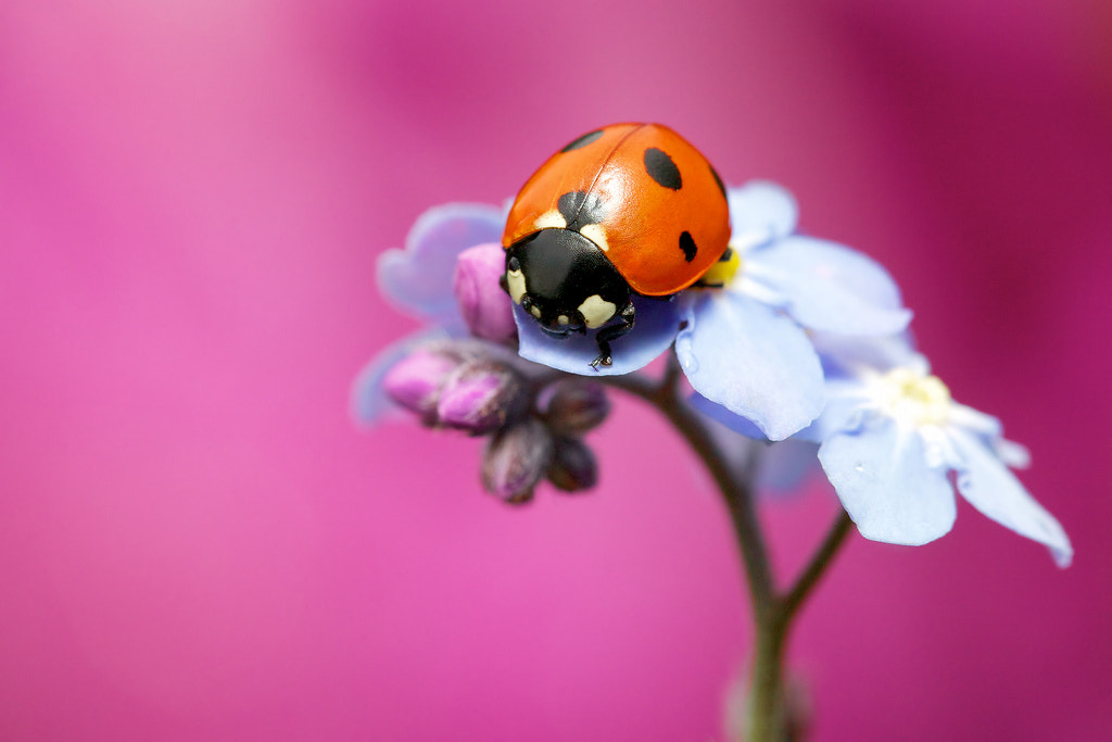Photograph red pink blue by Mark Bridger on 500px