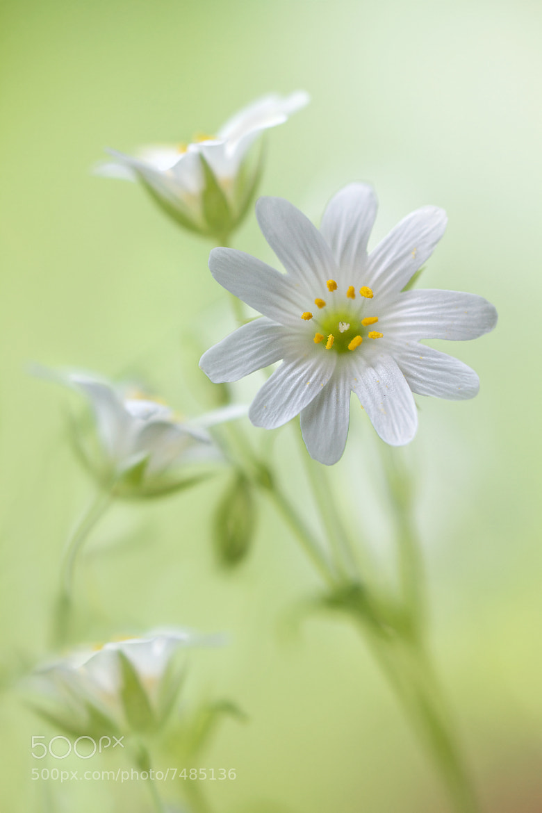 Photograph Spring Sparkle by Mandy Disher on 500px