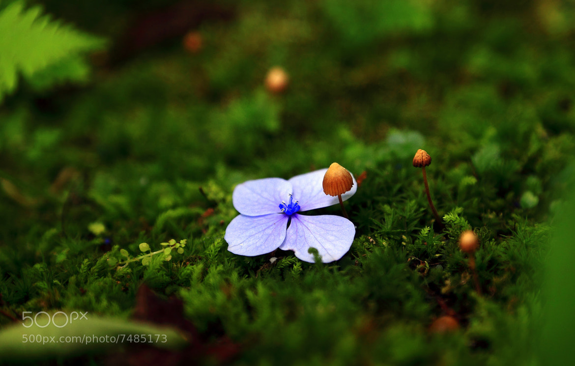 Photograph Falling Flower by yume . on 500px