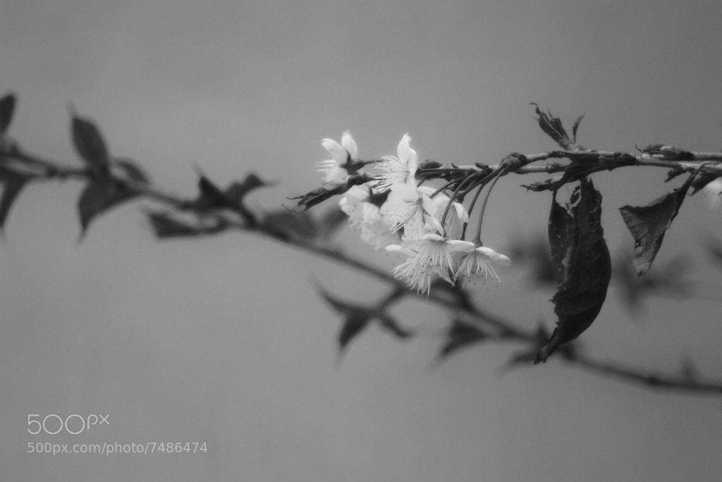 Photograph Spring by Roman Schatz on 500px