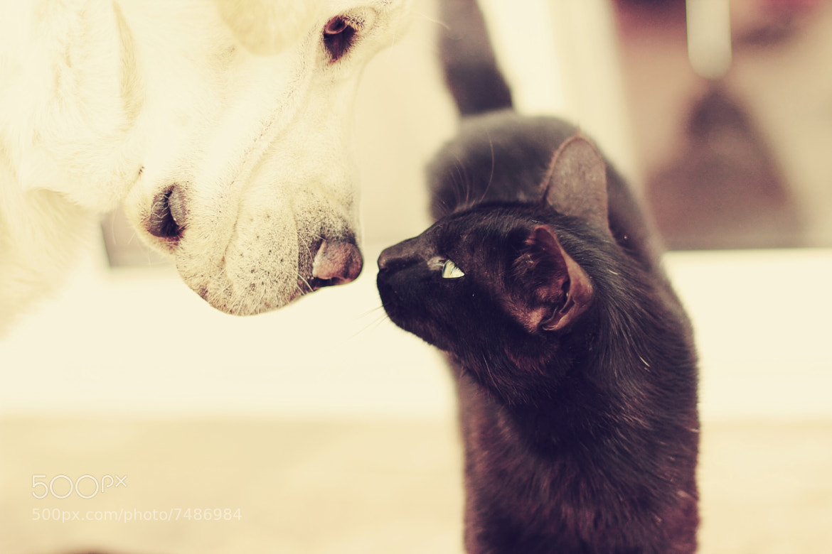 Photograph Cat & dog by raquel lopez-chicheri on 500px