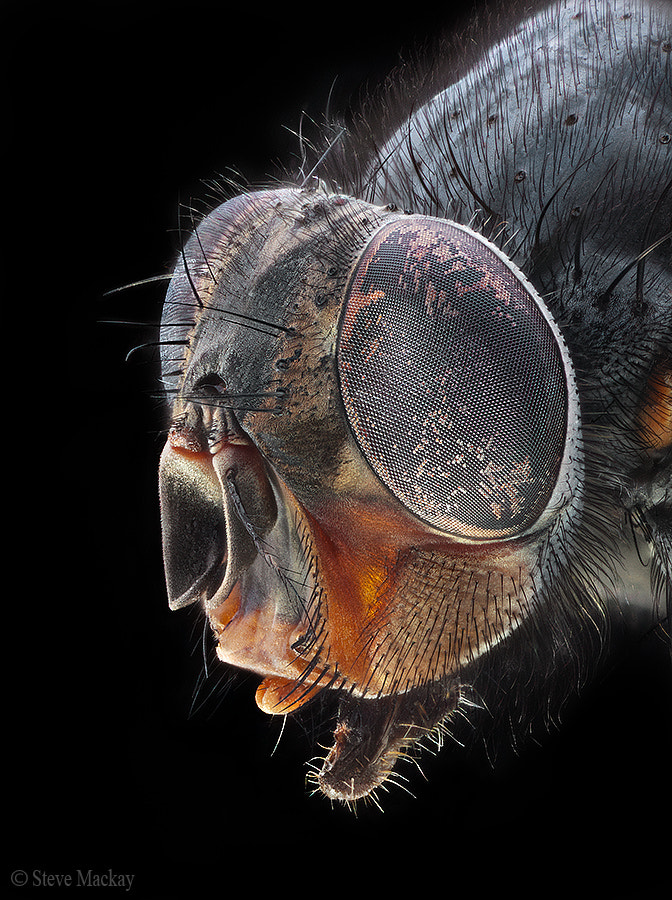 Photograph The Fly by Steve Mackay on 500px