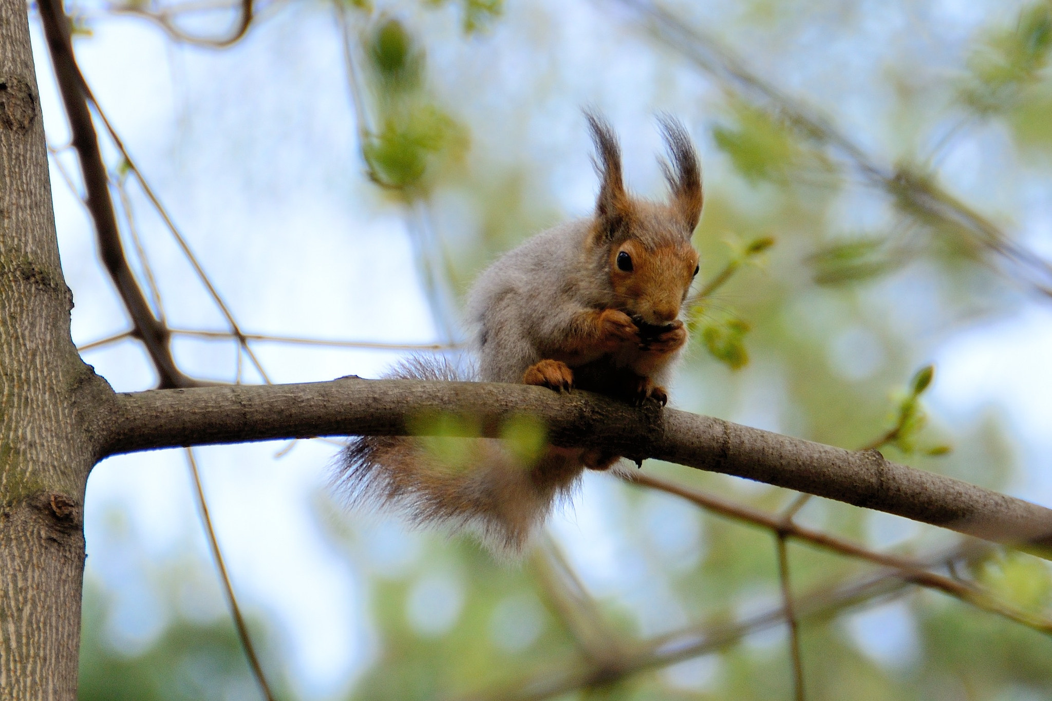 Photograph Squirrel by Alexander Zhegalov on 500px