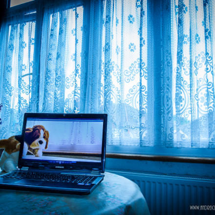 The Dog in the Screen