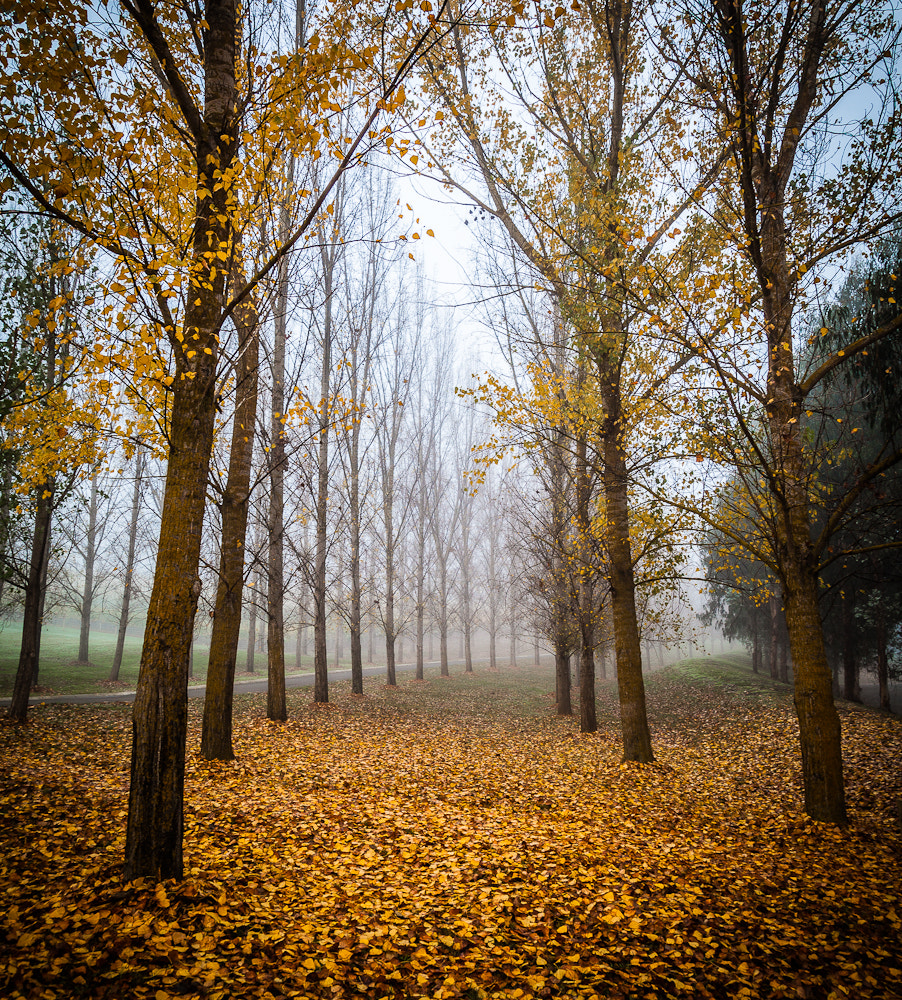 Photograph Autumn Mist by Margaret Netherwood on 500px