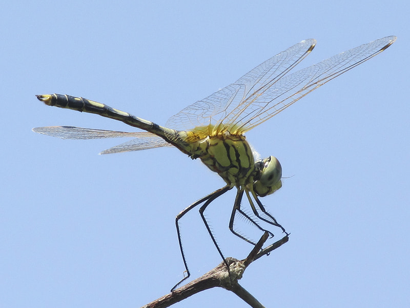 Photograph Dragon Fly by Aetiyuel Williams on 500px