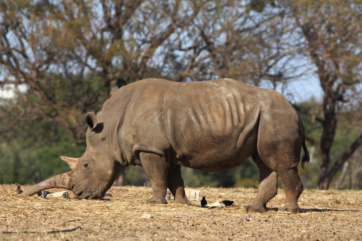 Photograph Rhino by Yuri Gomelsky on 500px