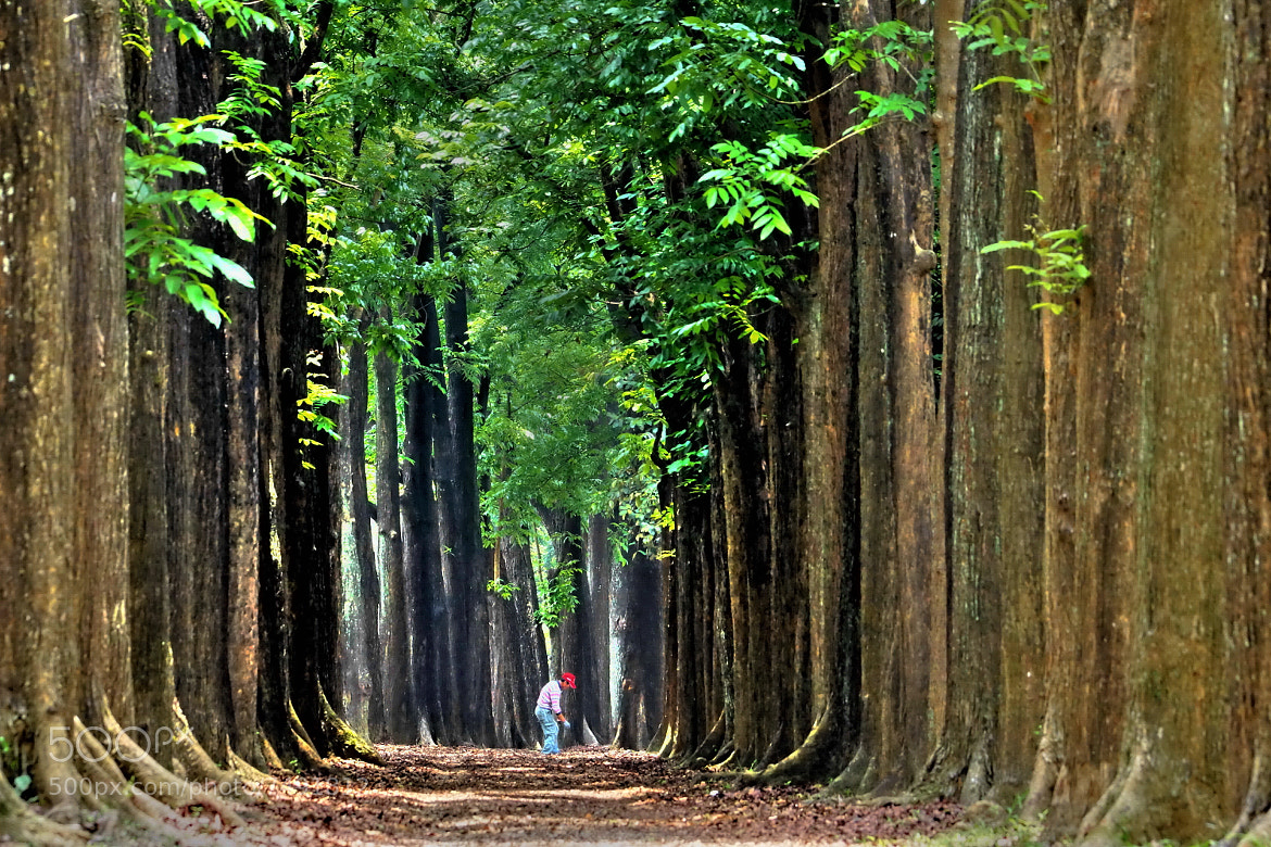 Photograph The woods by RL Yen on 500px