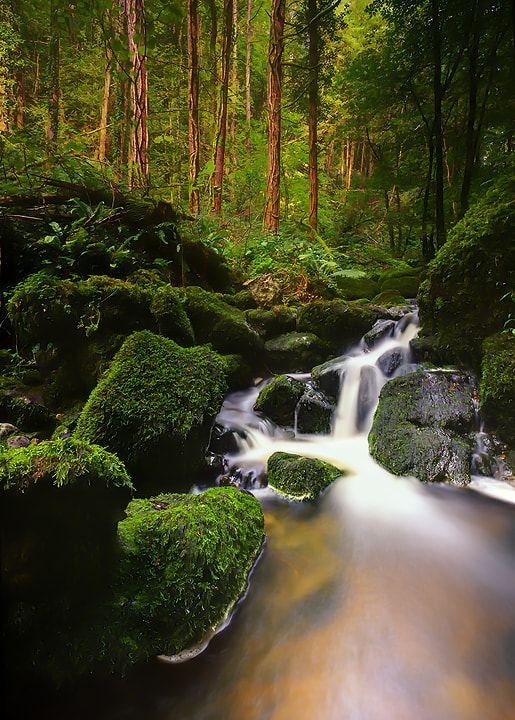 Photograph Mossy Stream by Kelvin Gillmor on 500px