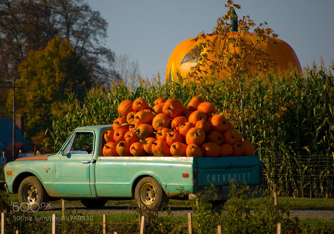 Photograph pumpkins! by Dennis Chong on 500px
