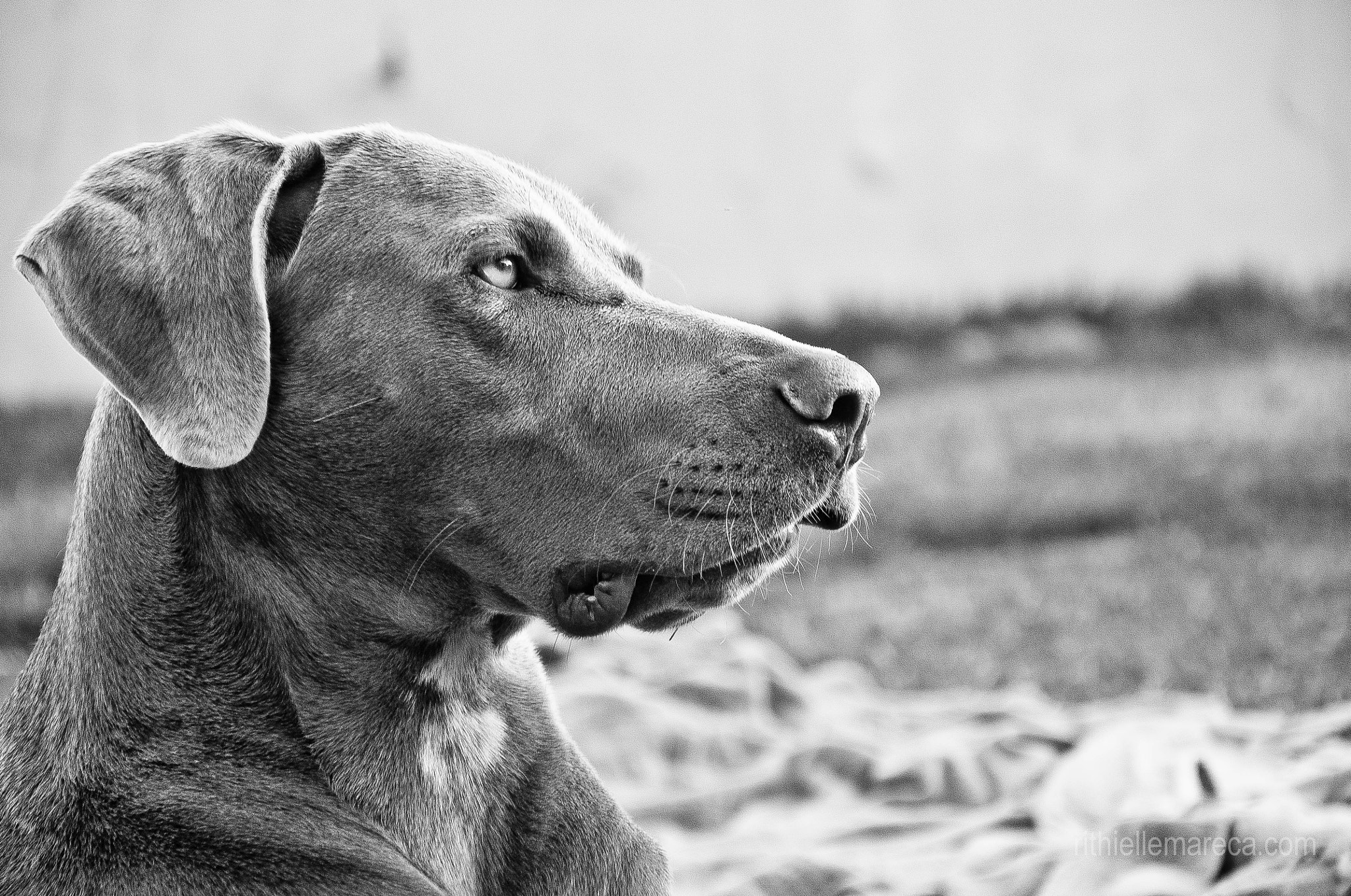 Photograph Dog by Rithielle Mareca on 500px