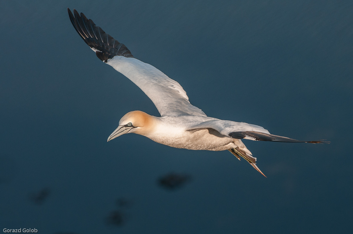 Photograph Flying my way by Gorazd Golob on 500px