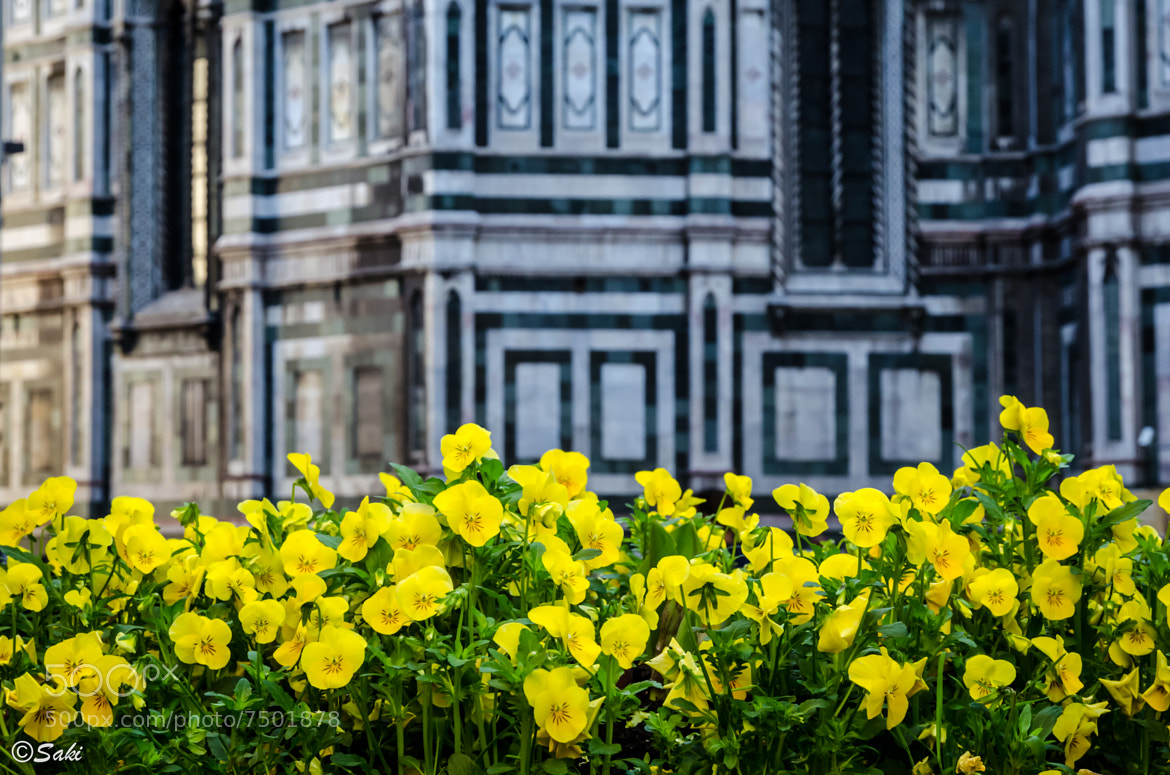 Photograph Flowers and Cathedral by Jozef (Saki) Sakalos on 500px