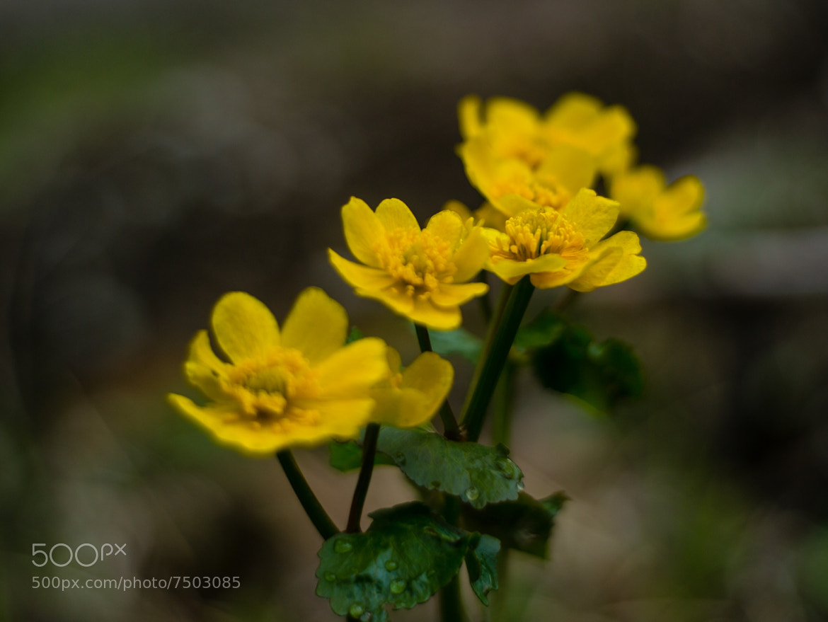 Photograph Spring in  yellow 1 by Tom Øyvind Hogstad on 500px