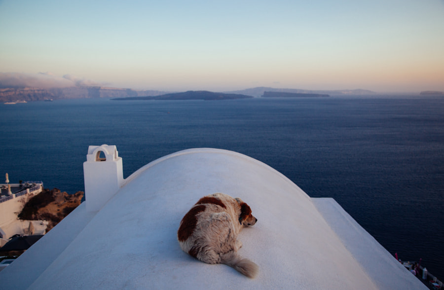 Photograph The dog and the sea by Vladimir Senchikhin on 500px