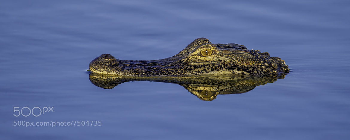 Photograph Gator Island by Daniel Parent on 500px