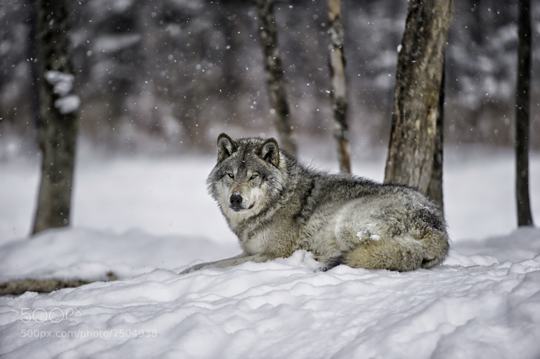 Photograph Waiting on a friend... by Daniel Parent on 500px