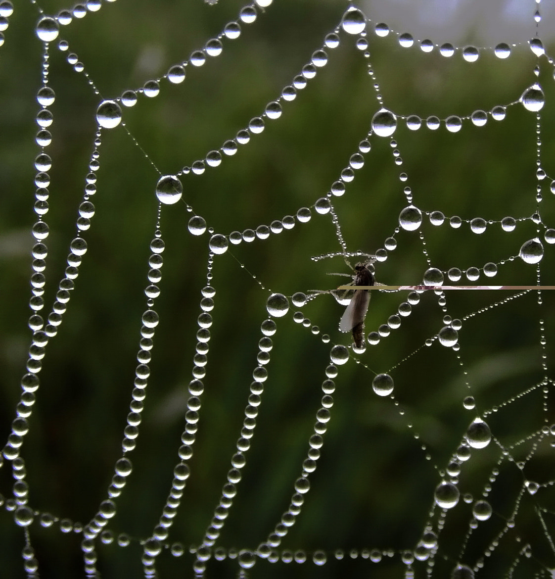 Photograph Web by Helen Filatova on 500px