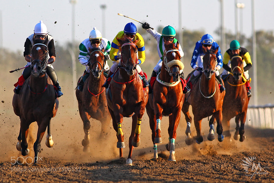 Photograph Horse Race by Maitham AlMisry on 500px