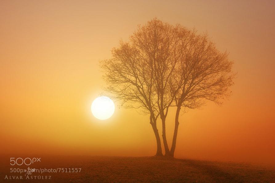 Photograph Golden fog** by Alvar Astúlez on 500px