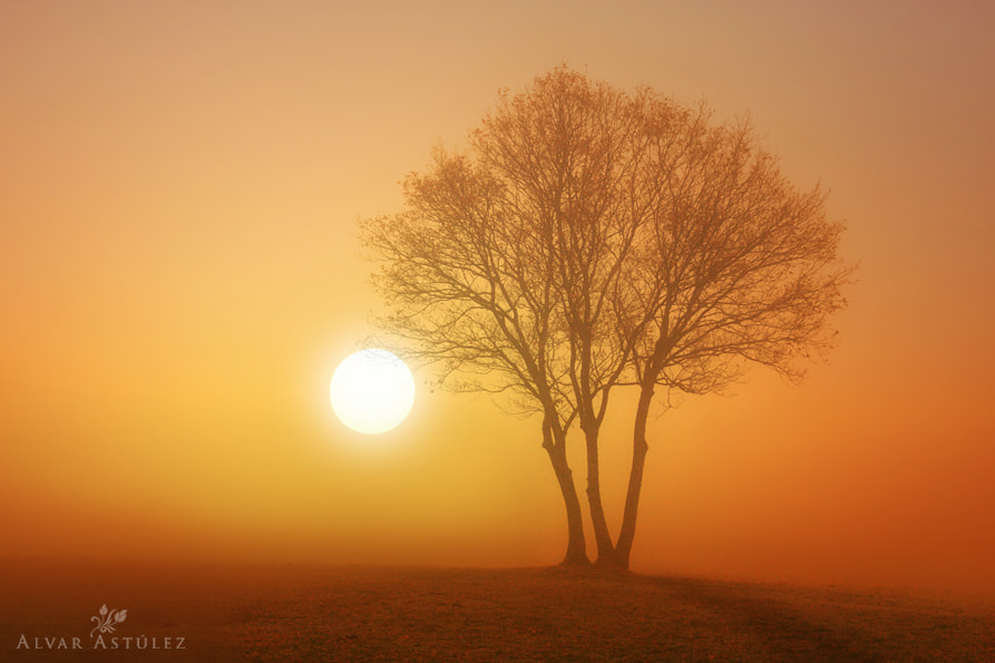 Photograph Golden fog** by Alvar Astúlez on 500px