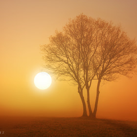 Golden fog** by Alvar Astúlez (alvar_astulez)) on 500px.com