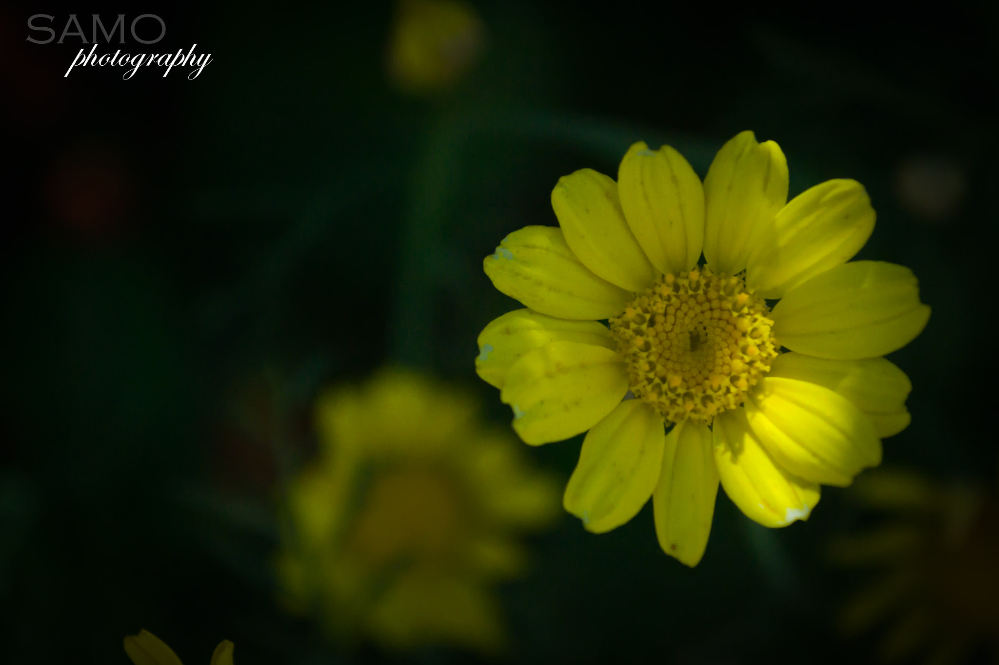 Photograph i love yellow <3  by sameh saied on 500px