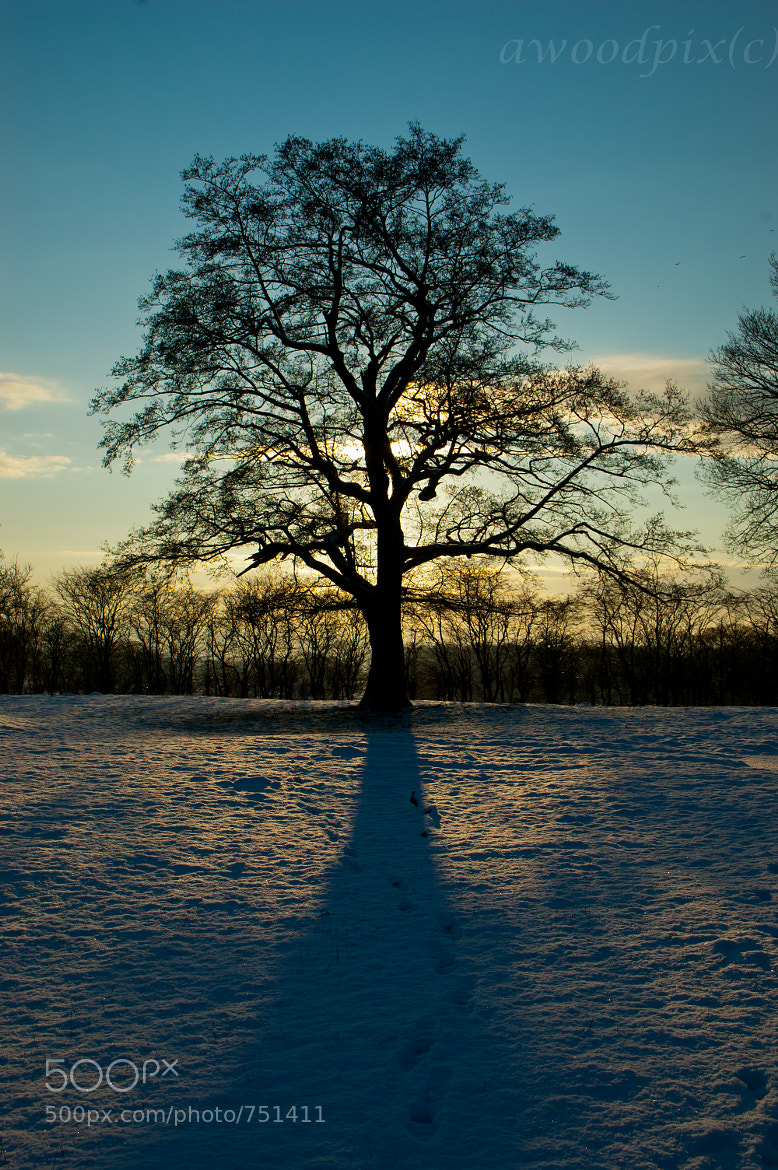 Photograph Silhouetted Tree by Andrew  Wood on 500px