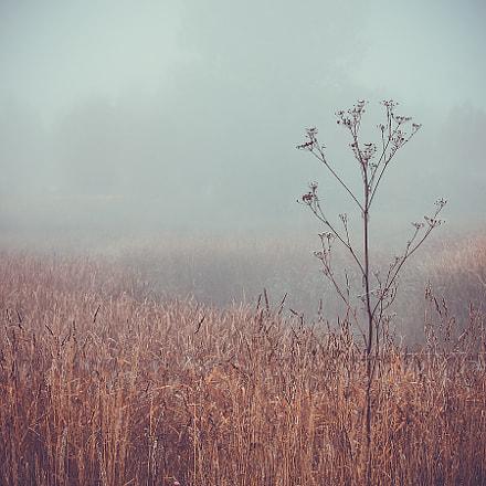 morning  fog  autumn