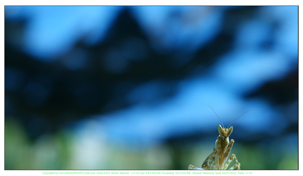 Photograph ready mantis by lionpink on 500px