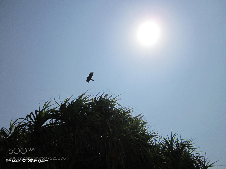 Photograph Phoenix.....? by Prasad Morajkar on 500px