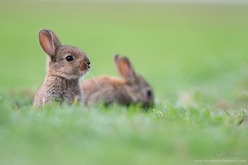 Photograph Rabbit :D by Michel d'Oultremont on 500px
