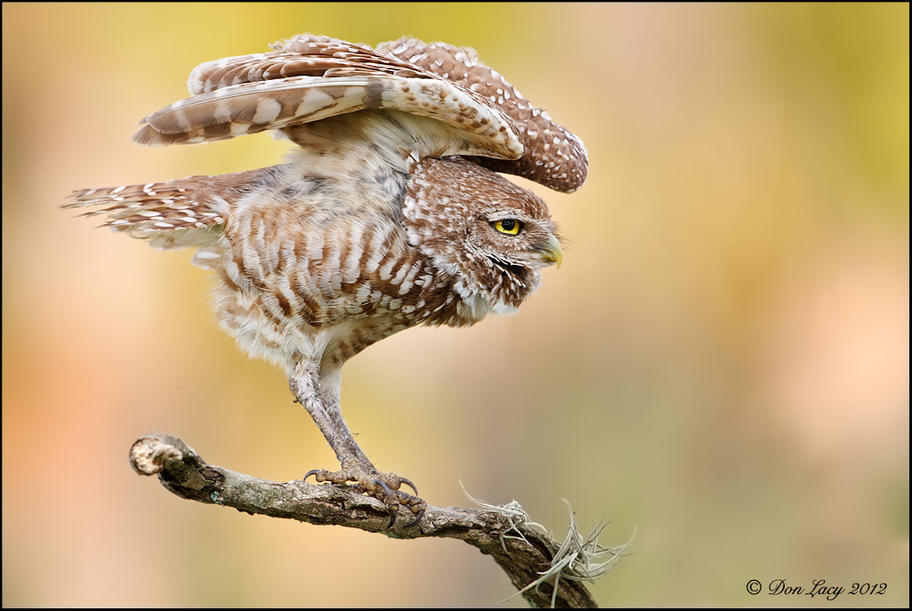 Photograph Stretch by Don Lacy on 500px