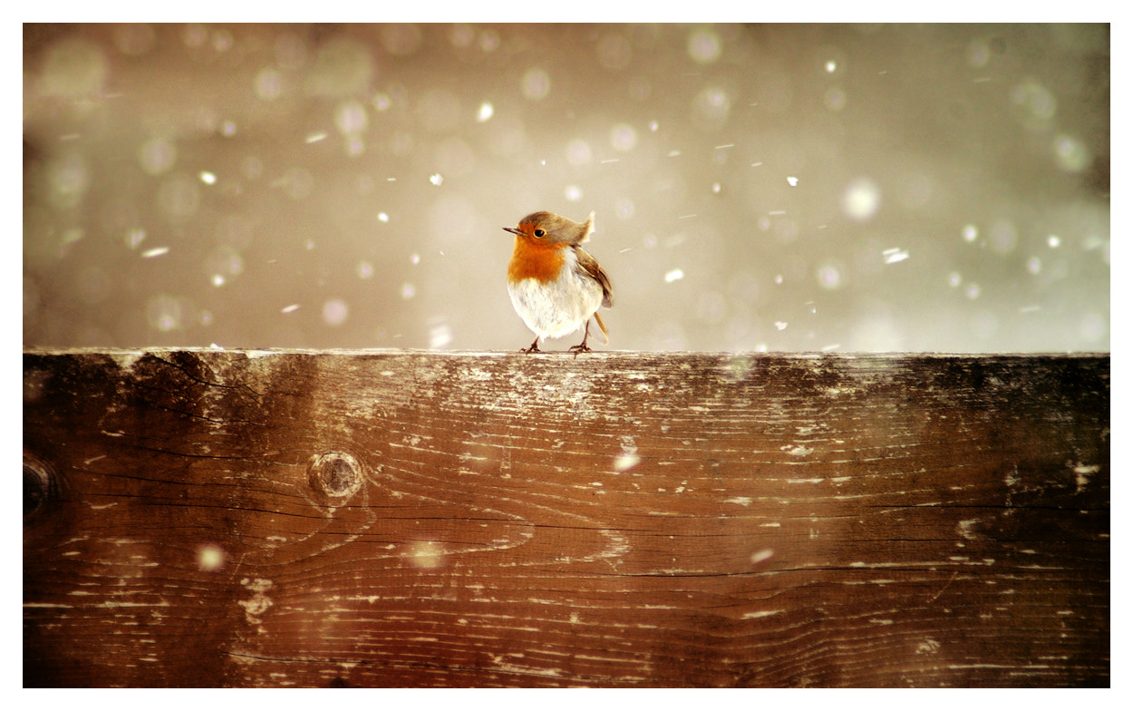 Photograph cold and windy by Nina-Milena Schreyer on 500px