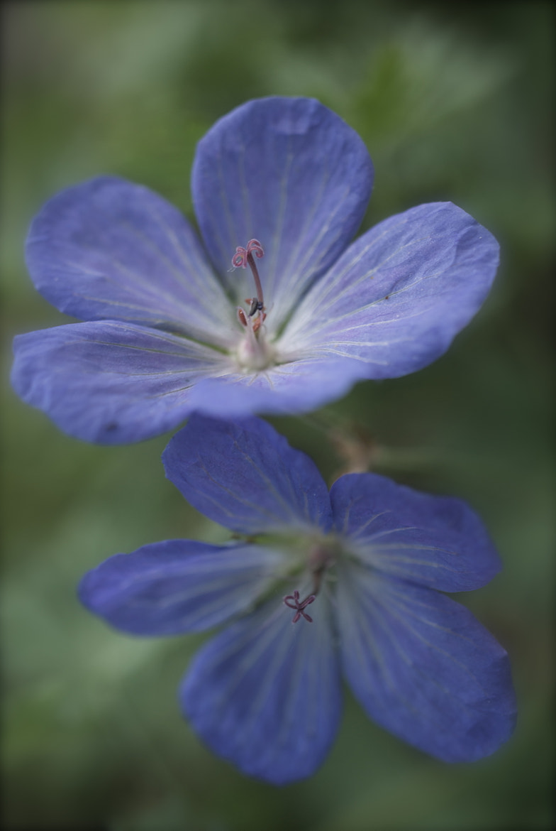 Photograph Cool blue by Denise's photos on 500px