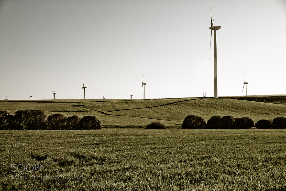 Photograph Wind Farm in Andalusia, Spain by Jose Malave on 500px