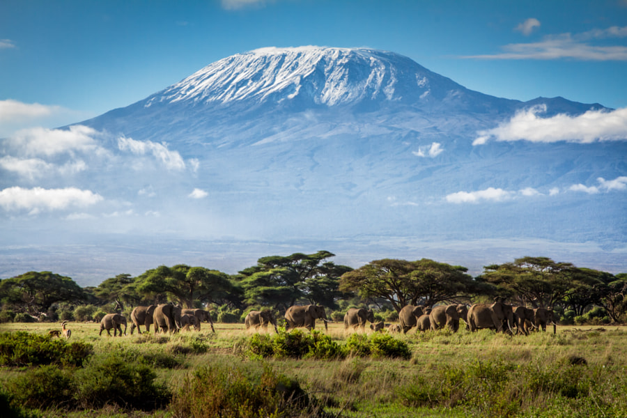 Kilimanjaro by Ian Lenehan on 500px.com