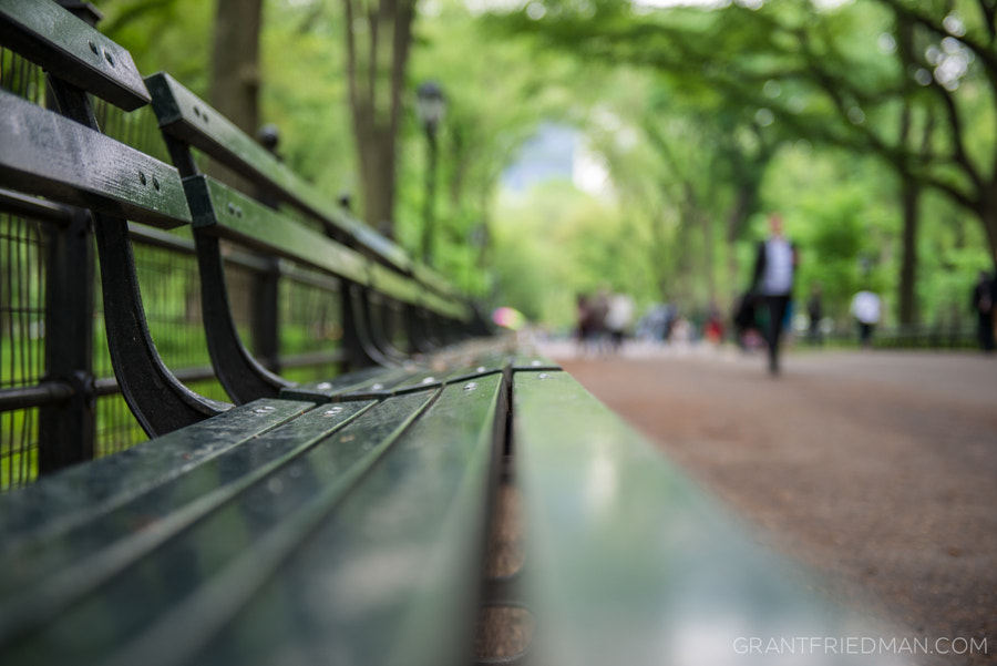 Photograph Stroll in the Park by Grant Friedman on 500px